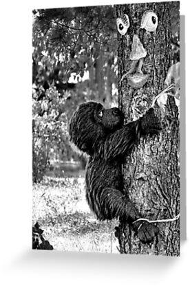 Save a Life ...Hug a Tree by Carla Jensen