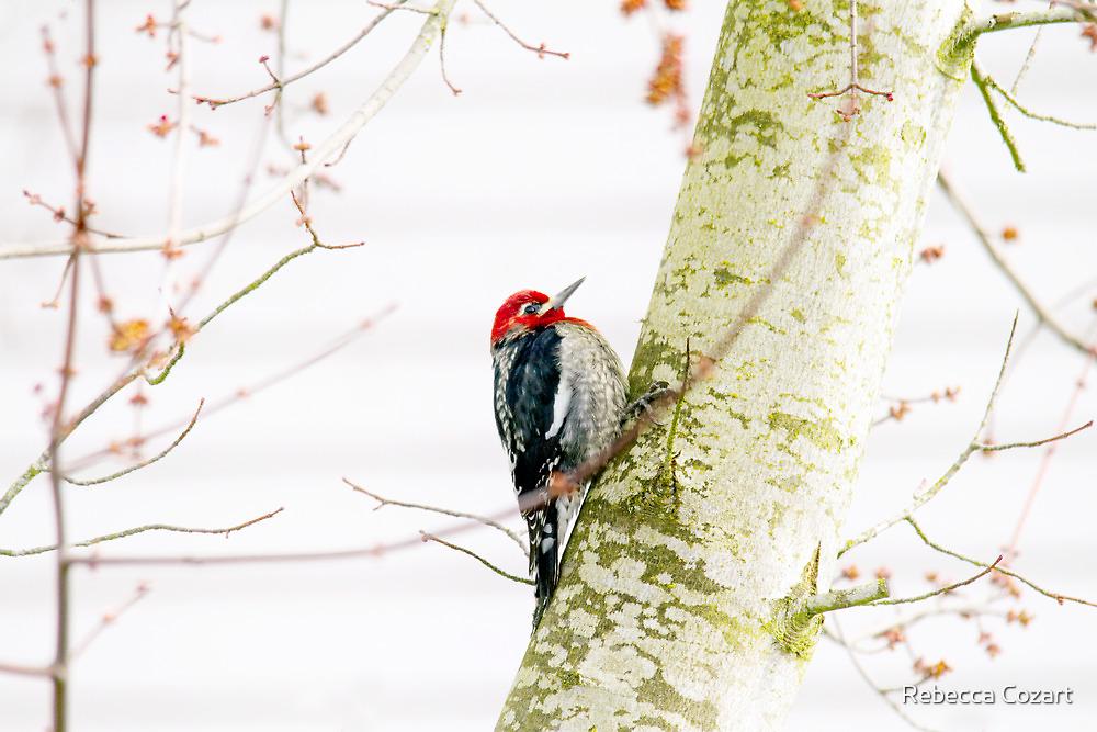 Pretty Bird by Rebecca Cozart