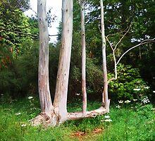 Eucalyptus Tree. by LADeville
