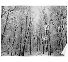 Winter in the woods b&w Poster