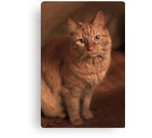 Just Cat ~ Canvas Print