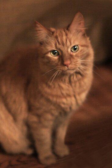 Just Cat ~ by Renee Blake