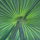 mexican palm by anfa77
