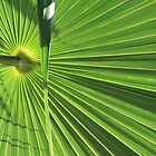 palm leaf by anfa77