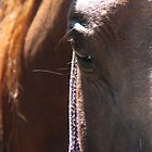 Horse Portrait - Close Up by AriannaRenee