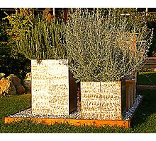Herbs In A Tuscan Garden Photographic Print
