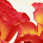 Roses by Theresa Selley