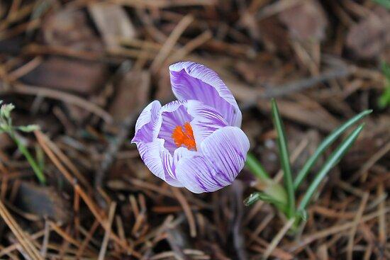 Flower by Annie Underwood