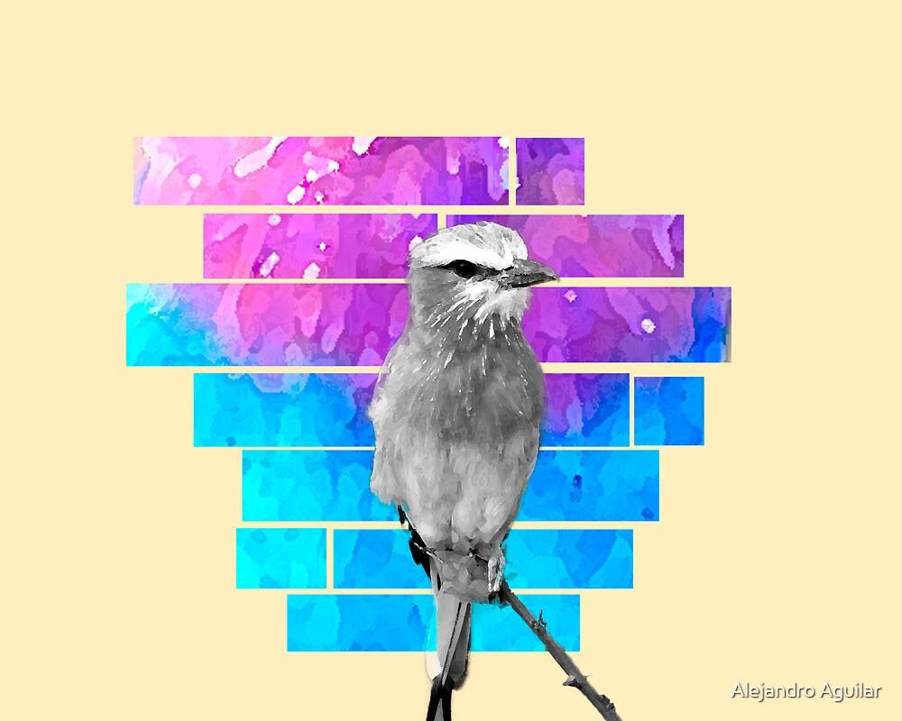 Colorbird by Alejandro Aguilar