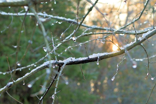 Icy Morning by ©Dawne M. Dunton