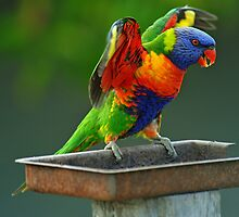Rainbow Lorikeet in our yard. Brisbane, Queensland, Australia. (2) by Ralph de Zilva