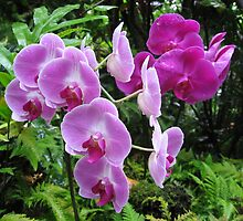 Orchids by Andrew Hogarth