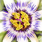 Passion Fruit Flower by claire87