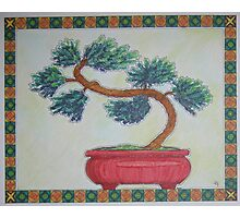 Bonsai Pine Photographic Print