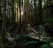 "From ""Giants of Geboor – The Forests of Mount Macedon"" 5 by Ben Cordia"