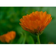 Flower and Flower Photographic Print