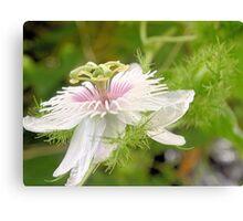 Bush passionfruit in flower Canvas Print