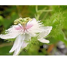 Bush passionfruit in flower Photographic Print