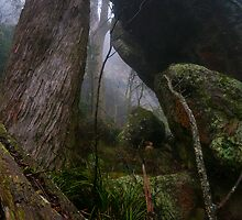 "From ""Giants of Geboor – The Forests of Mount Macedon"" 19 by Ben Cordia"