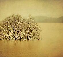 Rain, rain and more rain! by Lyn Darlington