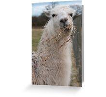 Loki the llama Greeting Card