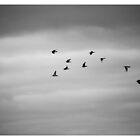 Birds of a Feather by MrHSingh