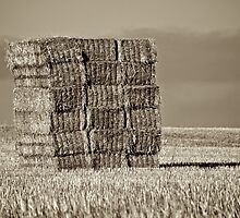 Haystacks by Michelle Hardy  Photography