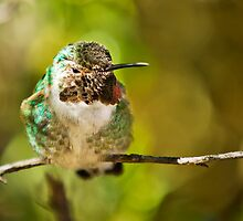 Hummingbird by Ray Chiarello