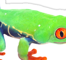 Red eyed tree frog Costa Rica Sticker