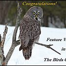 The Birds Owl Banner by hummingbirds