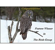 The Birds Owl Banner Photographic Print