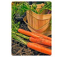 Fresh Garden Vegetables Photographic Print