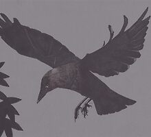 Jackdaw Escapes by Esther Green