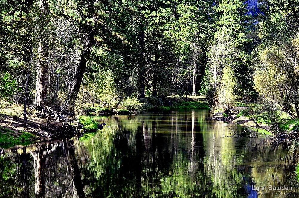 """""""Reflections"""" by Lynn Bawden"""