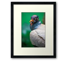 The Casanova of King Vultures Framed Print