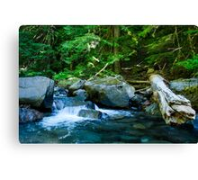 creek scape Canvas Print