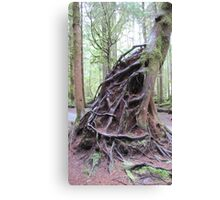Exposed roots Canvas Print