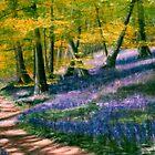 Bluebell Wood by Lynn Hughes