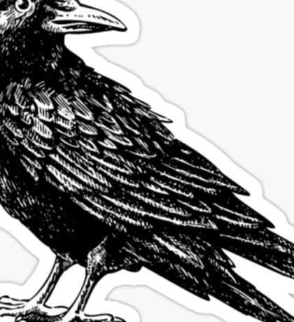 Raven ( crow ) Sticker