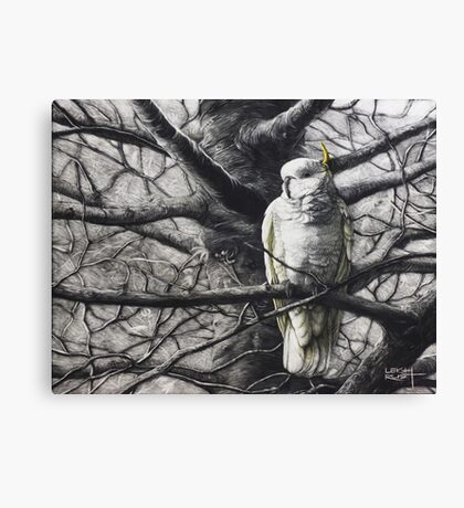Catching the morning light (Sulfur Crested Cockatoo) Canvas Print