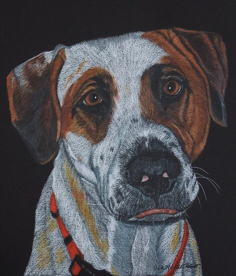 Bandit - Pit Bull Mix Commission by Anita Meistrell Putman