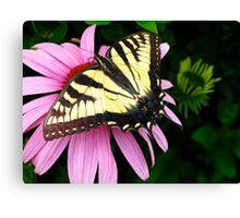 Open wings, open heart Canvas Print