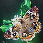 Buckeye Butterfly by lanadi