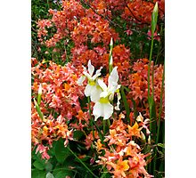 Rhododendron and Iris combo Photographic Print