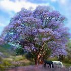 Under The Jacaranda by Carol  Cavalaris