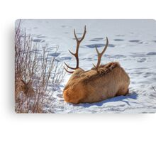 Hey Mikey...pull on his Antlers! Canvas Print