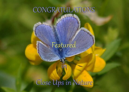 Banner : Close Ups in Nature by AnnDixon