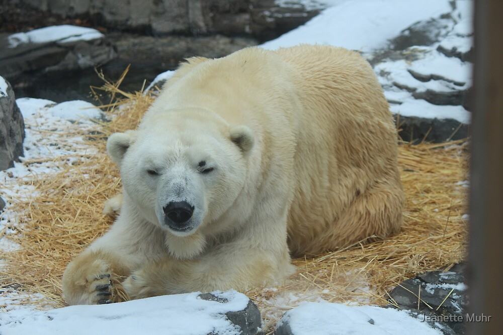 A visit to the Central Park Zoo by Jeanette Muhr