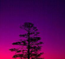 Sundown Ballarat No 1 ... by Erin Davis