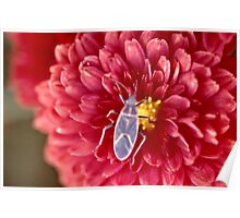 Bug on a flower Poster